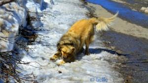 Verflixt – wo ist dieser Schneeball hin??? Nicol in the Snow - Colle di Sampeyre - 2284m – Italy