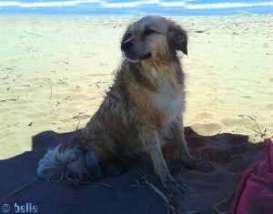 Nicol nach der Schwimmstunde - Platja dels Eucaliptus – Spain