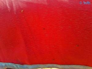 Mückenalarm am Platja dels Eucaliptus – Spain