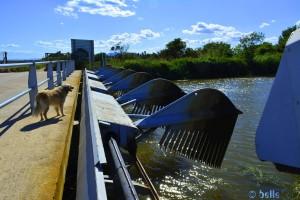 Automatischer Wasserreiniger am Delta del Ebre – Spain – (Bild 2)