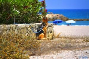 Herzlose Menschen.... Playa Almadrava – Spain