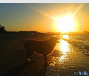 Nicol at Playa Almadrava – Spain