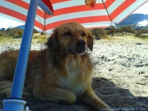 Nicol nach der Schwimmstunde - Caleta dels Gossets – Spain