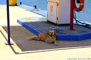 Nicol sucht den Schatten :o - Puerto deportivo Marina de las Salinas - Spain