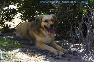 Nicol sucht den Schatten - Playa de Torre Derribada – Spain