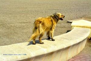 Schwarzfuss-Indianer Nicol - at Playa de las Salinas – Spain
