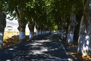 Allee-Einfahrt nach Berja – Spain