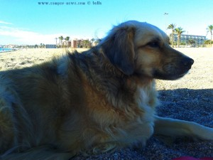 Nicol at Playa las Salinas – Spain