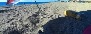 La Dolce Vita - Playa las Salinas – Spain