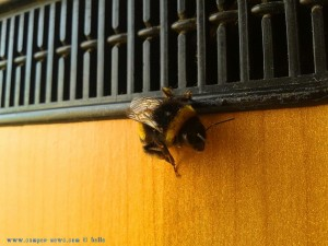 Hummel am Playa las Salinas – Spain