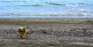 Nicol at Playa Almerimar – Spain