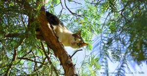Nicol findet jeder Katze... Roquetas de Mar – Spain