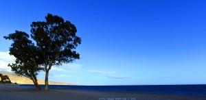 Eukalyptusbaum am Playa de los Bajos – Spain