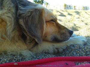 ...und danach selig schlafen - Nicol at Playa las Salinas – Spain