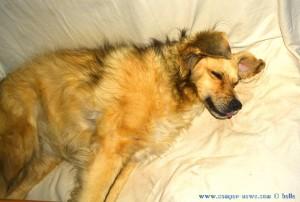 Nicol sleeping