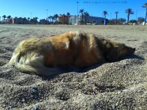 Nicol at Playa las Salinas - Spain