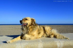 Nicol at Playa la Romanilla - Spain