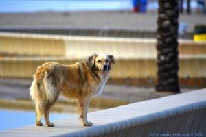 Nicol at Playa las Salinas – Spain