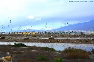 Nicol und die Möwen am Playa las Salinas – Spain