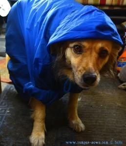Ich bin fertig für den Regen! Und Du? Nicol in Palmones – Spain