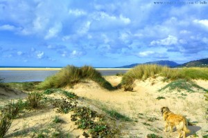 Nicol in the Dunes at Playa de los Lances Norte - Tarifa – Spain