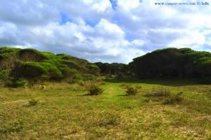 Nach dem Waldspaziergang - Playa de los Lances Norte - Tarifa – Spain