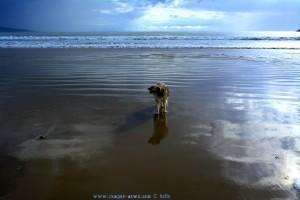 Guck mal - Nicol kann auf dem Wasser laufen! - Playa de Barbate – Spain