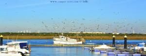 Ankommendes Schiff mit vielen Möwen - Puerto de Punta Umbría – Spain