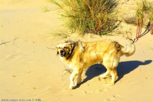 Zwinker! Nicol at Dunas de El Portil – Spain