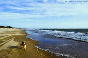 Strandspaziergang mit Nicol - Playa El Portil – Spain