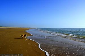 Strandspaziergang mit Nicol - Dunas de El Portil – Spain