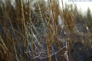 Tautropfen im Spinnennetz - Dunas de El Portil – Spain