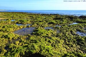 Mit Moos bewachsene Felsen - Dunas de El Portil – Spain
