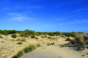 Suchspiel – wo ist Nicol? Dunas de El Portil – Spain