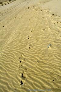 Deine Spuren im Sand.... Träller - Dunas de El Portil – Spain