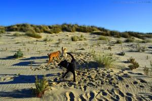 Bekanntschaft mit zwei Hunden - Dunas de El Portil – Spain