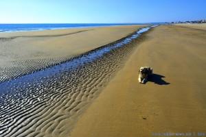 Strandspaziergang bei Ebbe - Dunas de El Portil – Spain