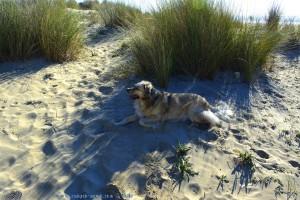Nicol ist müde - Dunas de El Portil – Spain