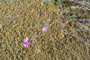 Nach dem Regen kommen die Blumen - Dunas de El Portil – Spain