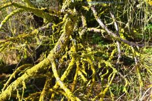 Totes Holz - Dunas de El Portil – Spain