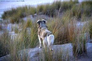 Nicol auf der Jagd - Dunas de El Portil – Spain