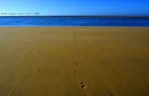 Spaziergang auf dem Meeresgrund!