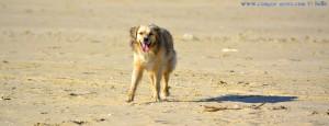 So sieht doch ein lachender Hund aus! Oder nicht? Dunas de El Portil – Spain
