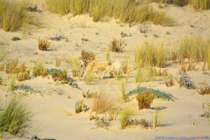 Nicol hält nix vom Strandspaziergang! Dunas de El Portil – Spain