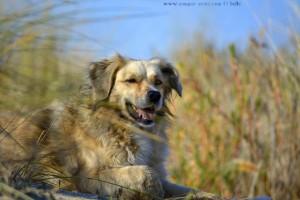 Nicol müde aber glücklich - Dunas de El Portil – Spain