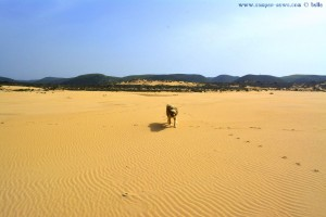 Schier unendliche Weite - Nicol at Praia da Bordeira - Portugal