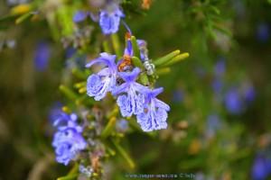 Zauberhafte Blüten - Praia da Bordeira – Portugal