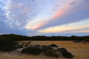 Nicol kontrolliert ihr Revier - Praia de Odeceixe – Portugal