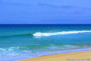 Möwen tanzen über den Wellen - Praia da Comporta – Portugal
