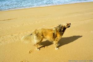 Nicol steht stramm im Wind - Praia da Comporta – Portugal